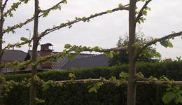 Tuinen CALLENS CARL - Bavikhove - Tuinafsluitingen & Pergola's
