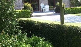 Tuinen CALLENS CARL - Bavikhove - Aanleg gazon