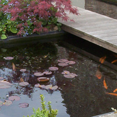 Tuinen CALLENS CARL - Vijvers & Zwembaden